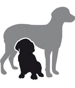 Hondenluiers dipy 12 st. - xs