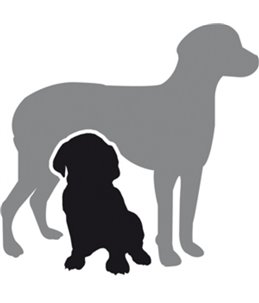 Hondenluiers dipy 12 st. - xl