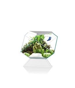 Aquarium nexus betta 5c