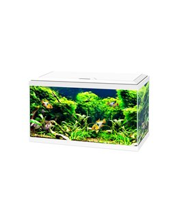 Aquarium 60 led cf80