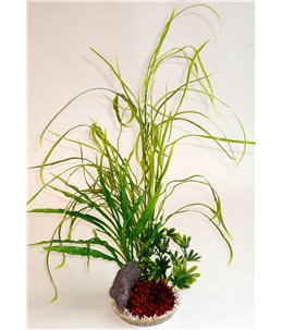 Sydeco lily grass rock
