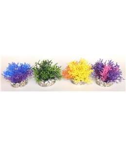 Sydeco coral reef