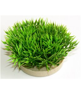 Sydeco green moss
