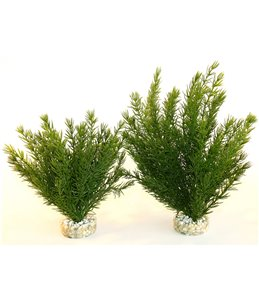 Sydeco club moss large