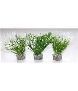 Sydeco nano green plant