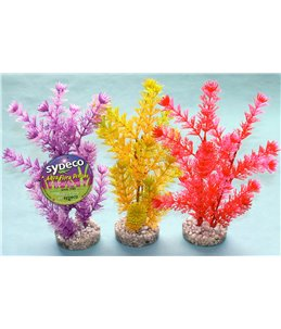Sydeco fiesta aqua plant