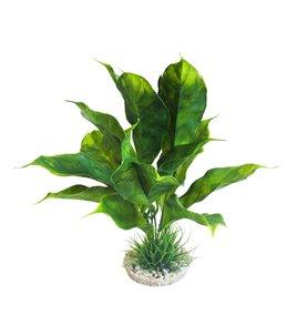 Sydeco anubias plant