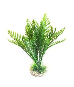 Sydeco hottonia plant