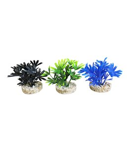 Sydeco mini dark plant