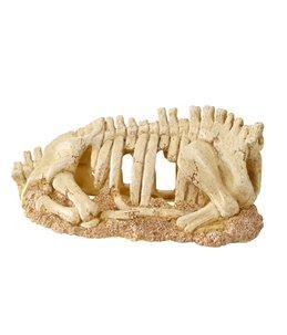 Skeleton torso