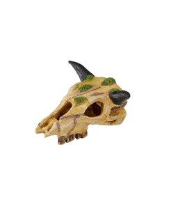 Carabaoskull