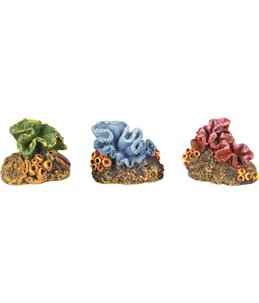 Decoratie kleine koraal - ass