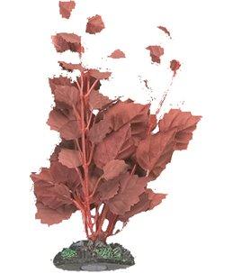 Aq. plant zijde egypt plant2 s