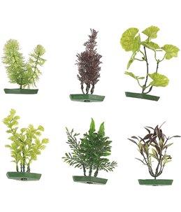 Aquarium plant assortiment - s