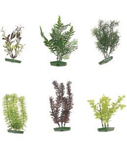 Aquarium plant assortiment - m