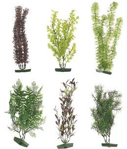 Aq. plant assortiment - xl