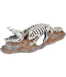 Ad skelo skelet krokodil 20x8x6cm