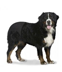 Hondenbroekje