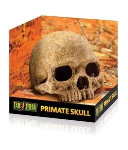 Ex primatenschedel