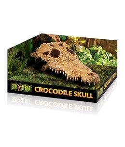 Ex krokodillenschedel