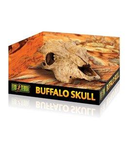 Ex buffelschedel