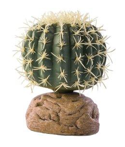 Ex cylinder cactus