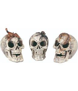 Terr. decoratie schedel - ass