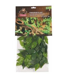 Terr. plant ficus 50cm
