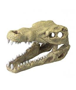 Krokodilen hoofd