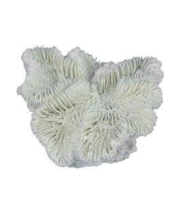 Fungia 12x12x5cm