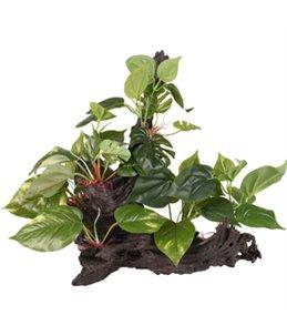 AD TROPICA TAK+PLANT 49x35x38CM